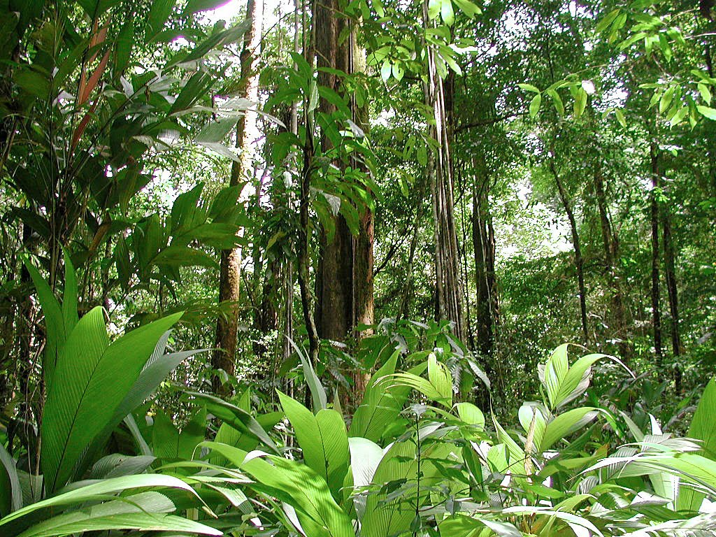 Rainforests Of The World - Save Rainforest