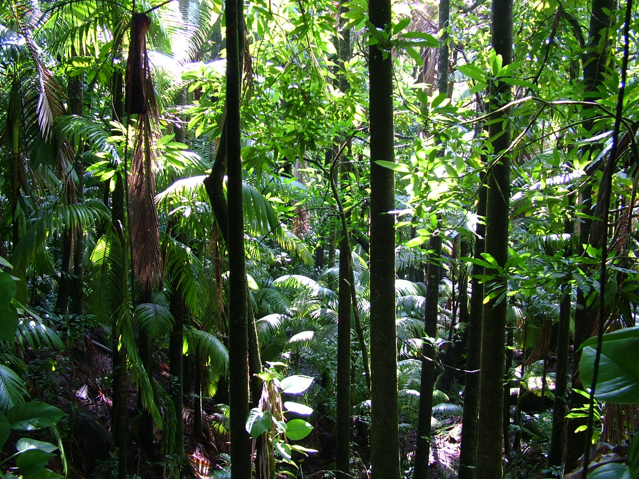 what are rainforests There are five major rainforests: the amazon, congo, australasian, southeast asian and central american madagascar is the site of a smaller rainforest in africa, but.